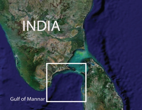 Opinions on Gulf of Mannar